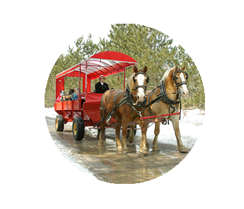 A horse drawn wagon